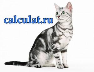 возраст кошек по человеческим меркам