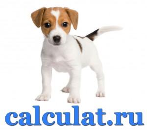 Определить возраст собаки